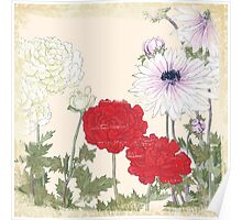 Vintage floral print on shabby white - Peony and Anemone Flower Poster