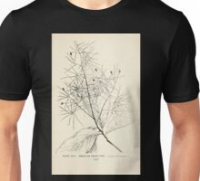 Southern wild flowers and trees together with shrubs vines Alice Lounsberry 1901 097 American Smoke Tree Unisex T-Shirt