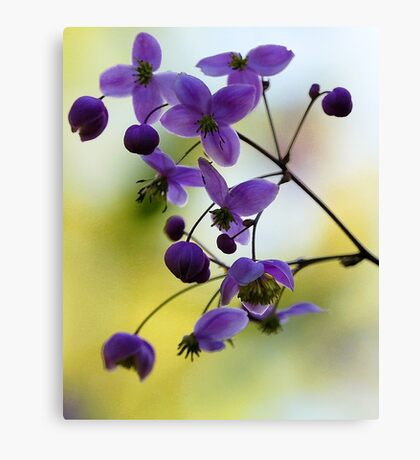Meadowrue - Morning Light Canvas Print