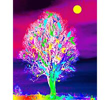 Fire Tree Photographic Print