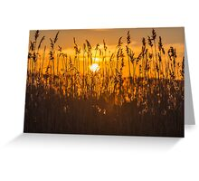 Harvest Sunset Greeting Card