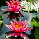 Water Lilies by vivsworld