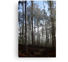 Misty trees in the morning Canvas Print