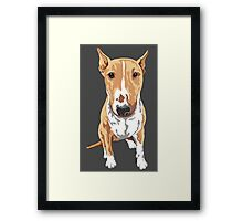 Aria The Bull Terrier Framed Print