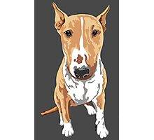 Aria The Bull Terrier Photographic Print