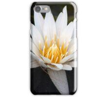 Longwood Gardens - Spring Series 37 iPhone Case/Skin