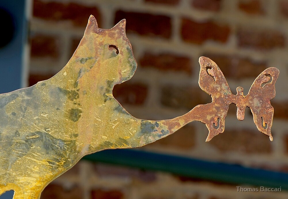 Rusty Cat and Butterfly by TJ Baccari Photography