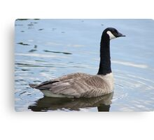 Silly Goose Canvas Print