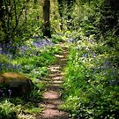 Woodland Walk by Colin Metcalf