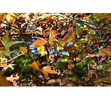 When Autumn Leaves Start To Fall.... Photographic Print