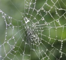 Dew Covered Web Sticker