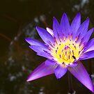A flies in a flower by Unai Ileaña