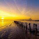 Sun is Up by Svetlana Sewell