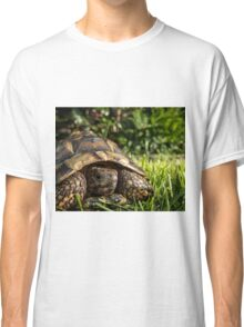 Tortoise Close up in Garden Classic T-Shirt