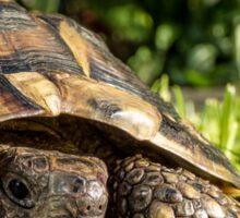 Tortoise Close up in Garden Sticker