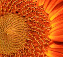 Bicolor Sunflower Sticker