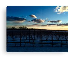 Snowy Vineyards Canvas Print