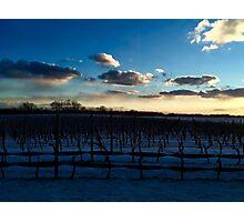 Snowy Vineyards Photographic Print