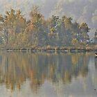 deer crossing the lake by dc witmer