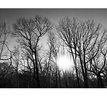 Frozen Branches Photographic Print