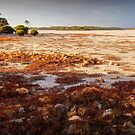 Coorong by Bette Devine