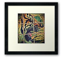 Tired Tiger Framed Print