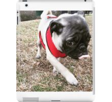 Pugsley and his red harness iPad Case/Skin