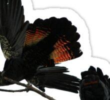 A Pair of Playful Black Cockatoos Sticker