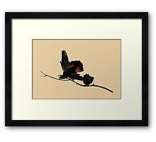 A Pair of Playful Black Cockatoos Framed Print