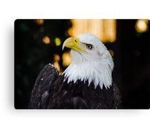 Eagle on Vancouver Island Canvas Print