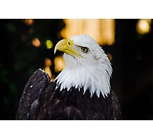 Eagle on Vancouver Island Photographic Print