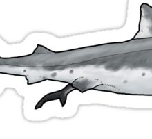 The extinct shark Squalicorax Sticker