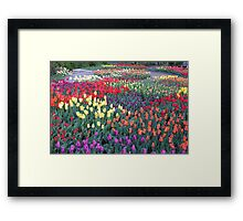 Tulips Everywhere Framed Print