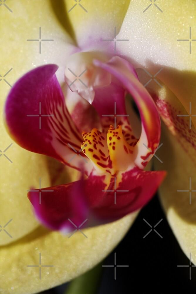 Blushing Orchid by Joy Watson