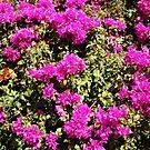 Purple pua by zumi