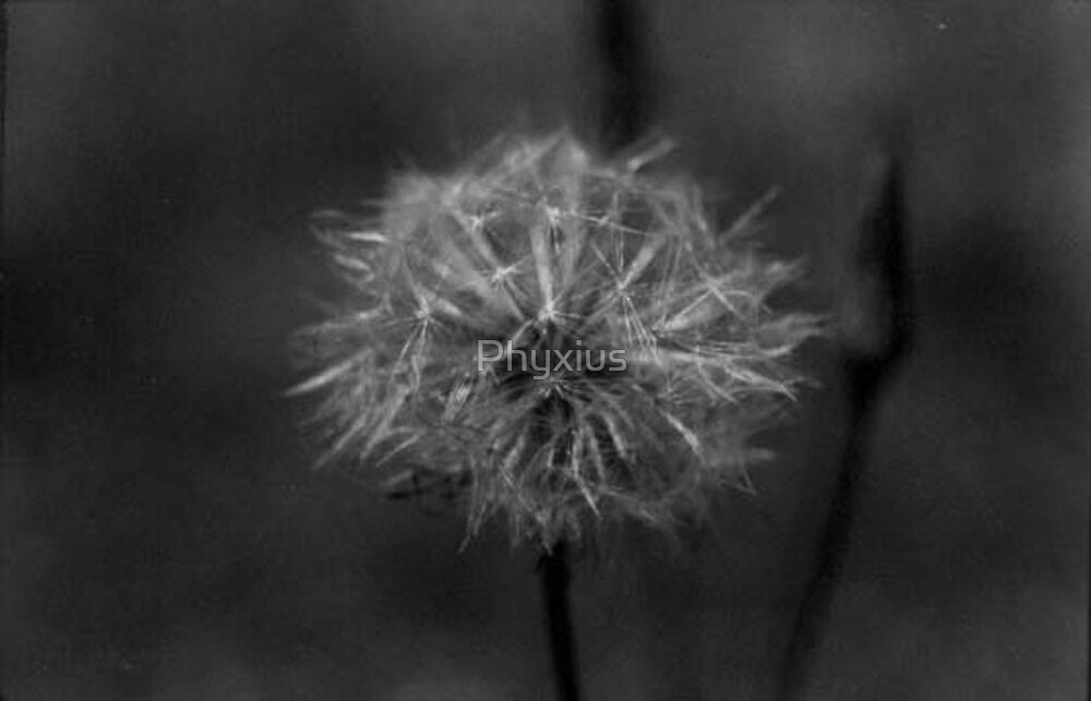 Make a Wish by Phyxius