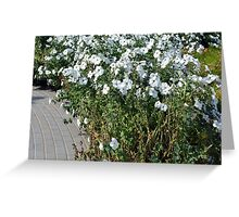 Green bush with white flowers. Greeting Card