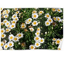 Green bush with white flowers. Poster