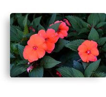 Beautiful red flowers and green leaves, natural background. Canvas Print