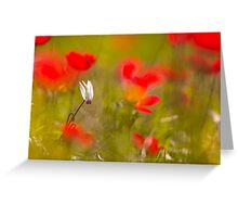 Persian Violets (Cyclamen persicum), Photographed in Israel in February  Greeting Card