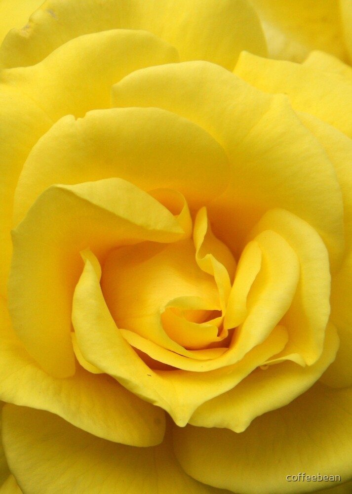 Yellow Rose Of Texas by coffeebean