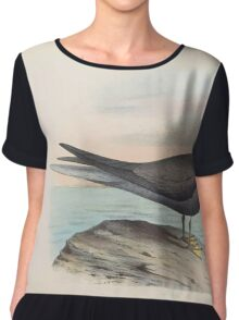 Aves Hawaiienses the birds of the Sandwich Islands Scott Wilson 1899 048 Sterna Hawaiiensis Women's Chiffon Top