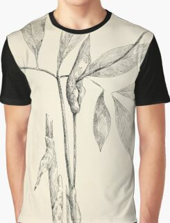 Southern wild flowers and trees together with shrubs vines Alice Lounsberry 1901 012 Green Dragon Graphic T-Shirt