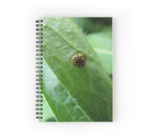 Yellow ladybugs in nature Spiral Notebook