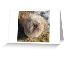shih tzu lovely Greeting Card
