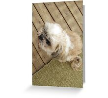 shih tzu look cool Greeting Card