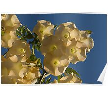 Angel Trumpets in the Sky Poster