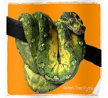 Green Tree Python Reptile Photography  Poster