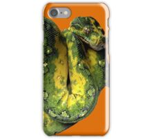 Green Tree Python Reptile Photography  iPhone Case/Skin