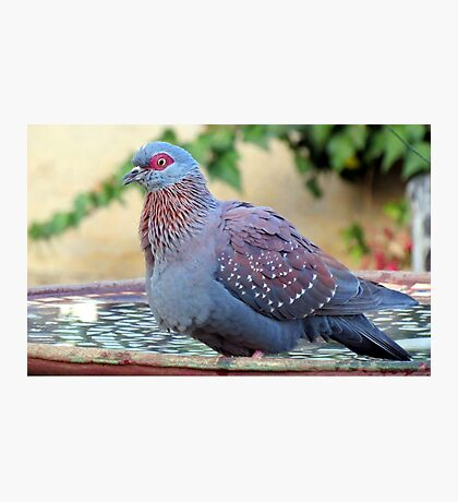 A feathered friend in my garden Photographic Print